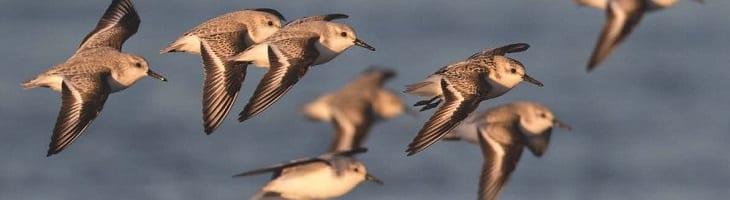 ondersteuning van tekst over birdwatch