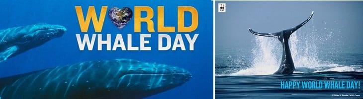 afbeelding versterkt walvisdag
