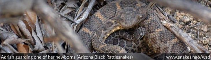 afbeelding versterkt wereld slangendag